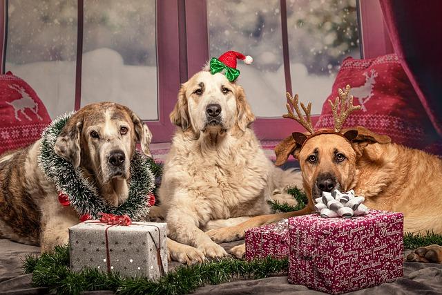 3 dogs lying around christmas gifts