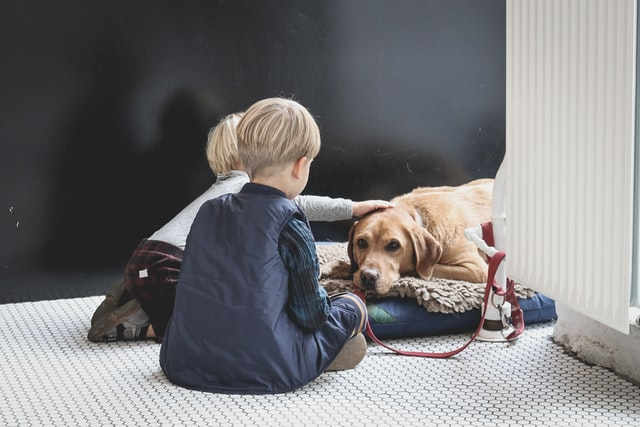 kids petting the golden retriever which is lying