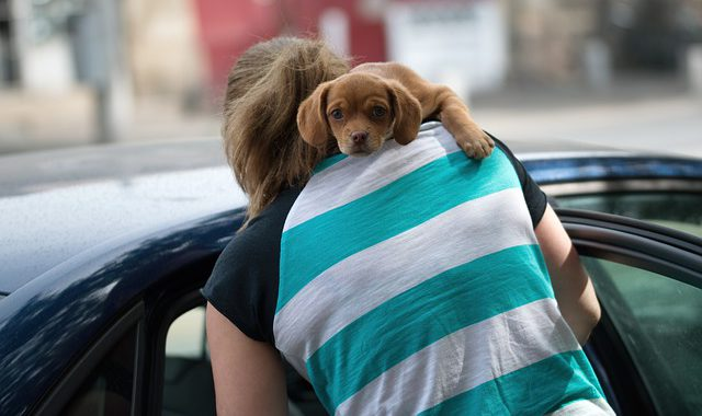 puppy in the arm of a woman entering a car